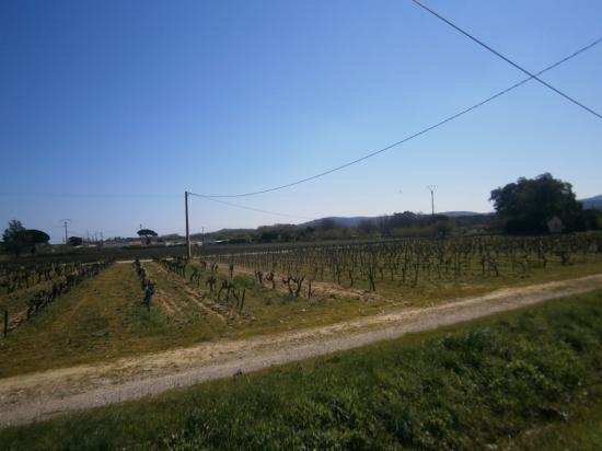 Un parcours le long de grands Vignobles Varois